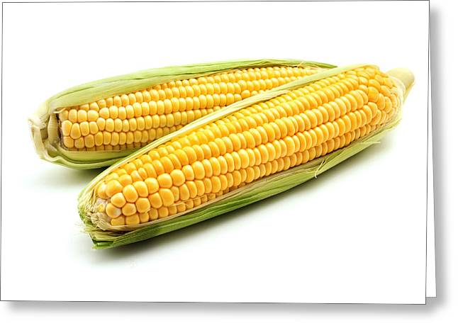 Corn Kernel Greeting Cards - Ears of maize Greeting Card by Fabrizio Troiani