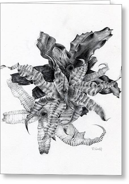 Bromeliad Drawings Greeting Cards - Earth Stars Greeting Card by Penrith Goff