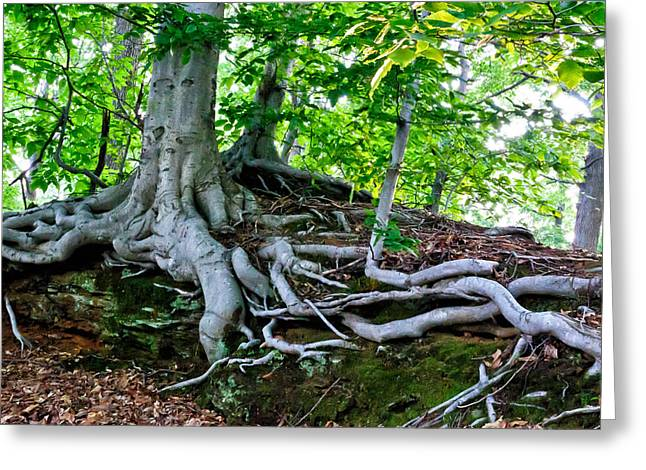 Tree Roots Greeting Cards - Earth Tree and Roots Greeting Card by Louis Dallara