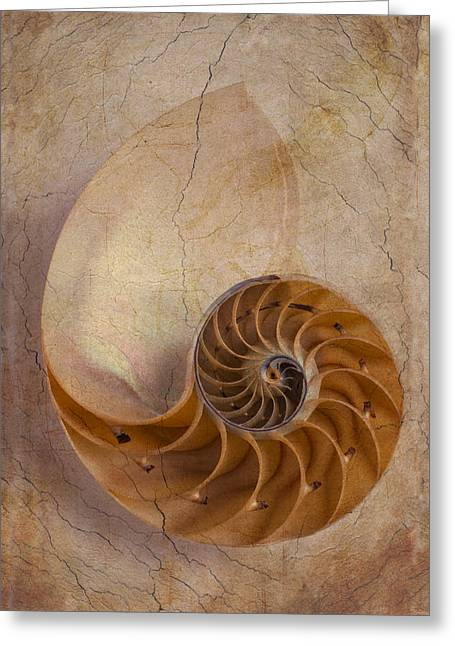 Warm Tones Photographs Greeting Cards - Earthy Nautilus Shell  Greeting Card by Garry Gay