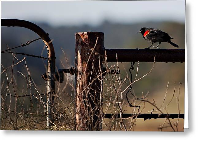 Eary Morning Blackbird Greeting Card by Art Block Collections