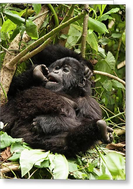 East Africa, Rwanda, Volcanoes National Greeting Card by Joe and Mary Ann Mcdonald
