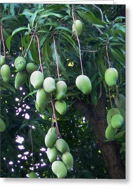 Mango Greeting Cards - East Indian Mango Tree Greeting Card by Stuart Wilson