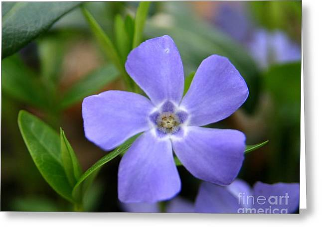 Wildflowers Greeting Cards - Easter Blues  Greeting Card by Neal  Eslinger