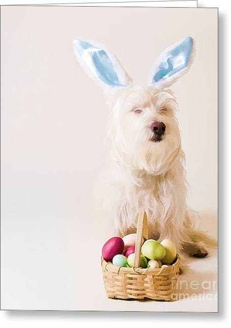 Funny Photographs Greeting Cards - Easter Bunny Westie Greeting Card by Edward Fielding