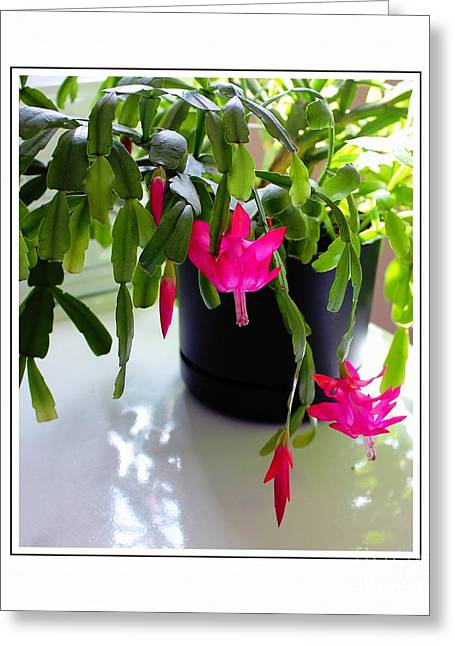 Green Barbara Griffin Art Greeting Cards - Easter Cactus in the Sun 2 Greeting Card by Barbara Griffin