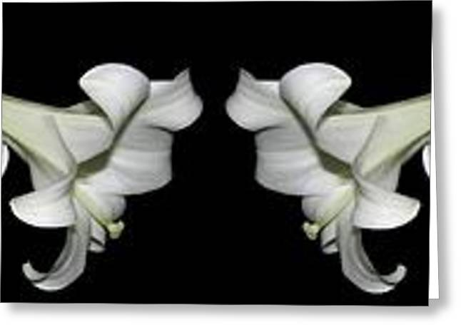 Holy Week Greeting Cards - Easter Lilies Panorama Greeting Card by Rose Santuci-Sofranko