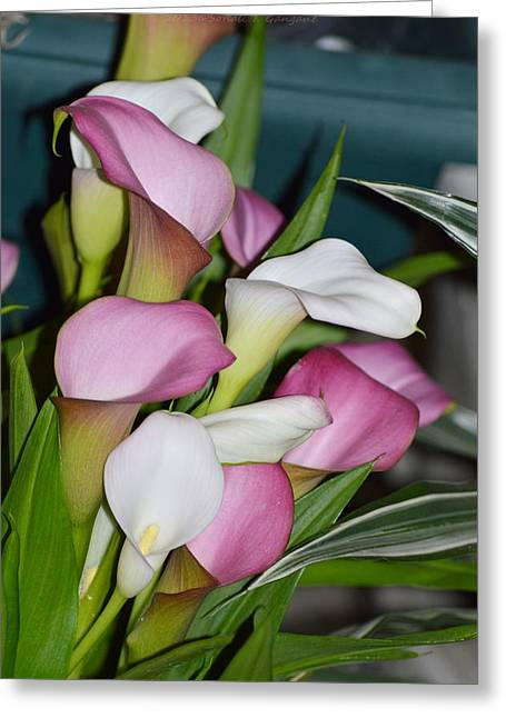 Thankyou Greeting Cards - Easter Lilies Greeting Card by Sonali Gangane