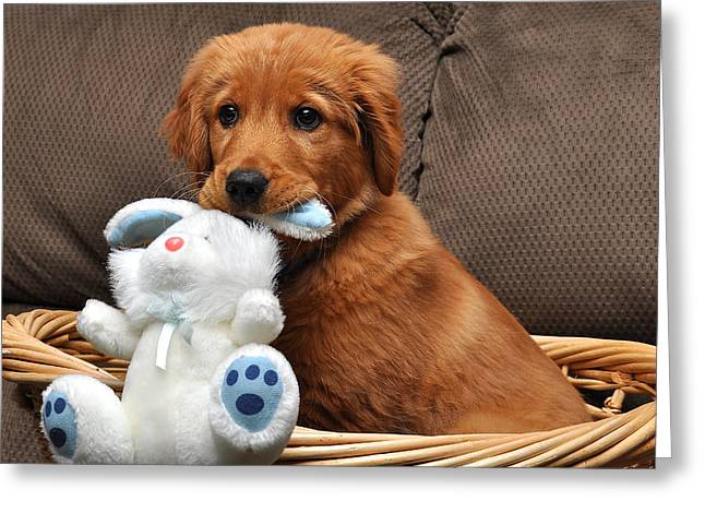Easter Images Greeting Cards - Easter Puppy Greeting Card by Todd Hostetter