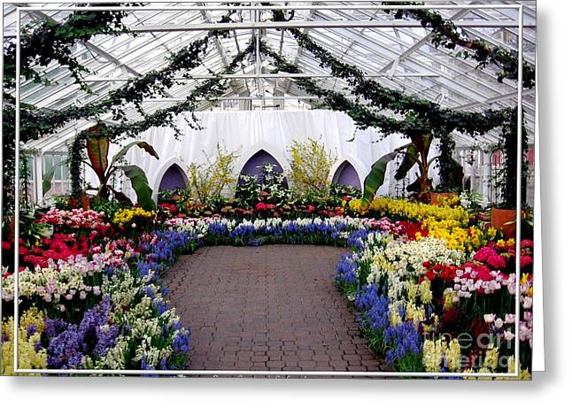 Spring Bulbs Greeting Cards - Easter Spring Flower Show at Botanical Gardens Greeting Card by Rose Santuci-Sofranko