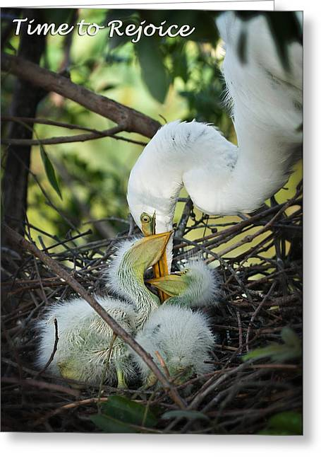 Easter Greeting Cards - Easter Time to Rejoice Greeting Card by Dawn Currie