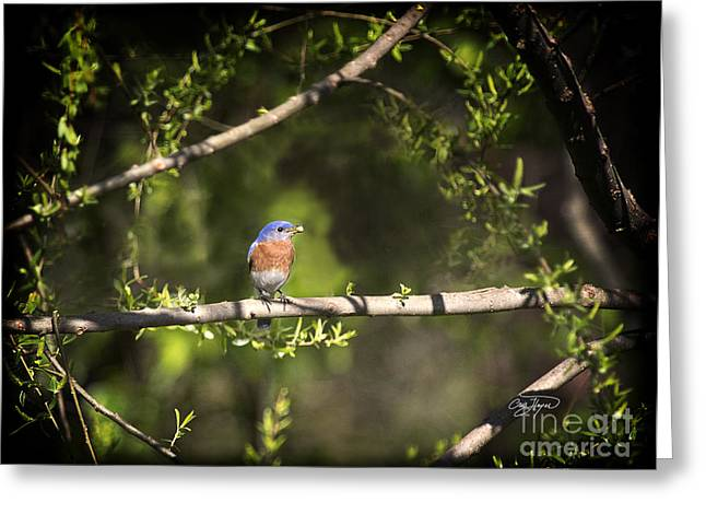 Disney Artist Greeting Cards - Eastern Blue Bird at Sunrise Greeting Card by Cris Hayes