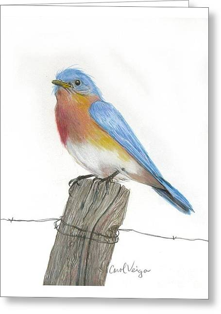 Old Fence Posts Drawings Greeting Cards - Eastern Blue Bird Greeting Card by Carol Veiga