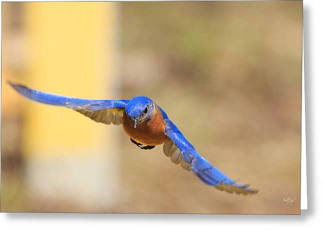 Eastern Bluebird Greeting Card by Everet Regal