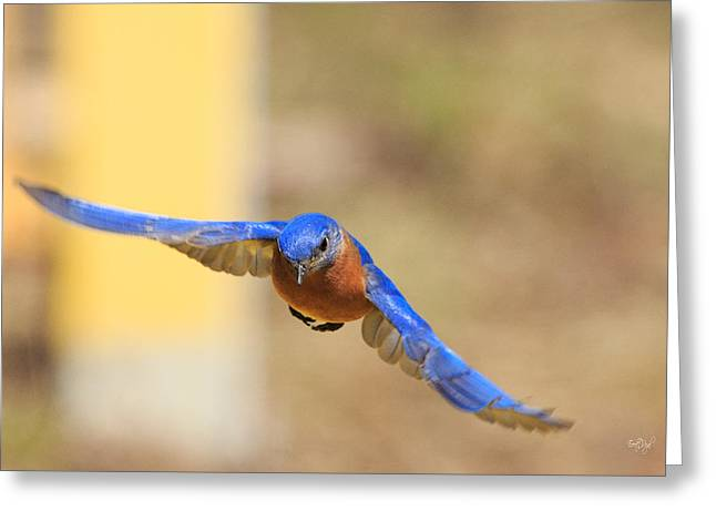 Eastern Bluebird Greeting Cards - Eastern Bluebird Greeting Card by Everet Regal
