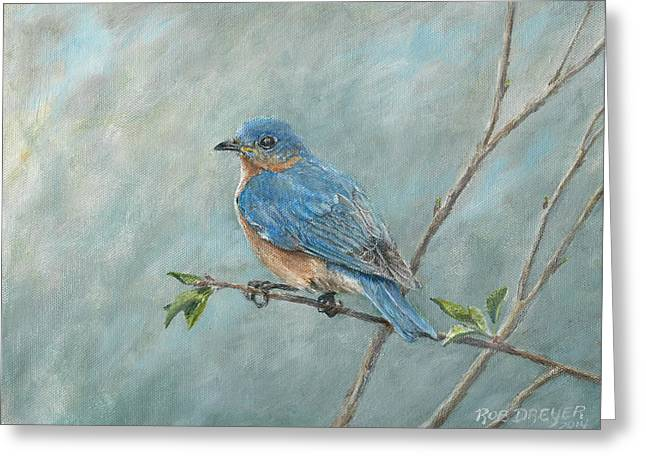 Eastern Bluebird Greeting Cards - Eastern Bluebird Greeting Card by Rob Dreyer AFC