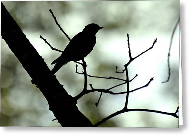 Eastern Bluebird Silhouette - 1095c1560a Greeting Card by Paul Lyndon Phillips