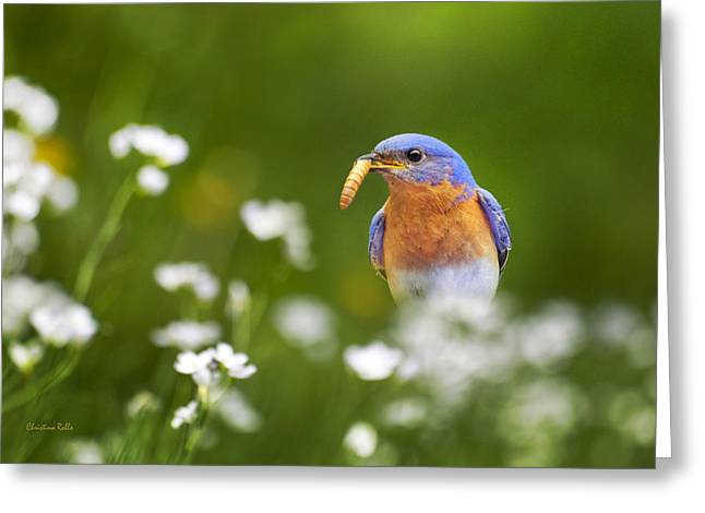 Bluebird Greeting Cards - Eastern Bluebird with Worm Greeting Card by Christina Rollo