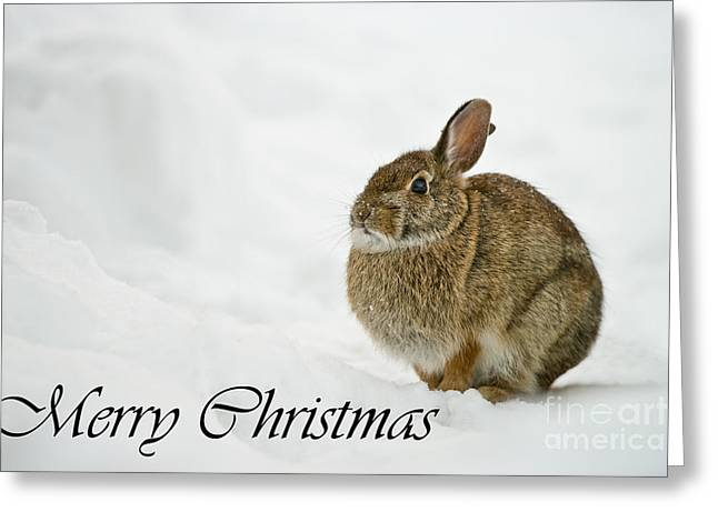 Wildlife Pics Greeting Cards - Eastern Cottontail Christmas Card 1 Greeting Card by Michael Cummings