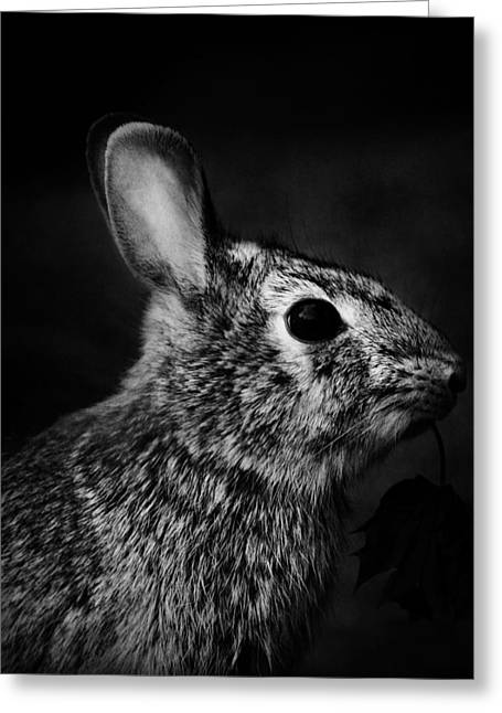 Country Cottage Greeting Cards - Eastern Cottontail Rabbit Portrait Greeting Card by Rebecca Sherman