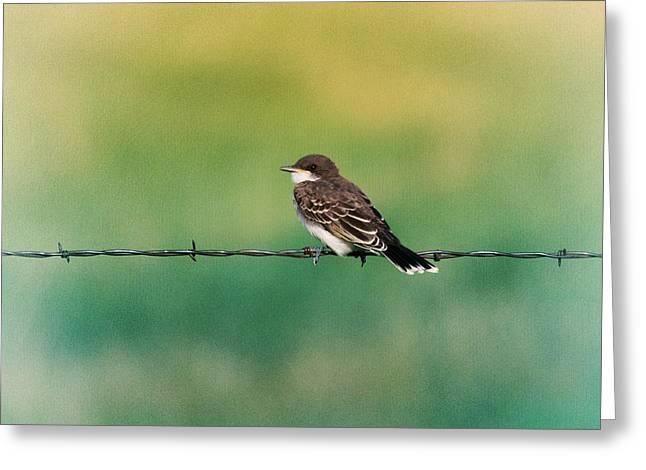 Eastern Kingbird Greeting Cards - Eastern Kingbird Greeting Card by Jess Williams
