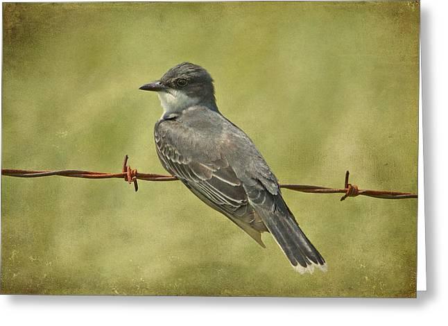 Eastern Kingbird Greeting Cards - Eastern Kingbird Greeting Card by Sandy Keeton