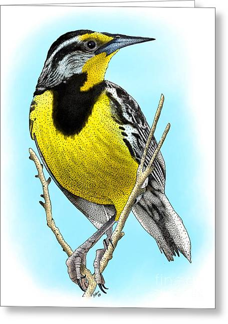 Eastern Meadowlark Greeting Card by Roger Hall