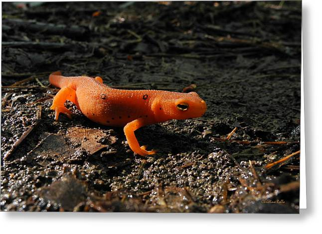 Eastern Newt Red Eft Greeting Card by Christina Rollo