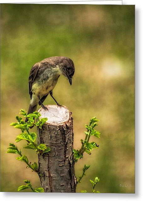 Art Decor Greeting Cards - Eastern Phoebe Greeting Card by Bob Orsillo