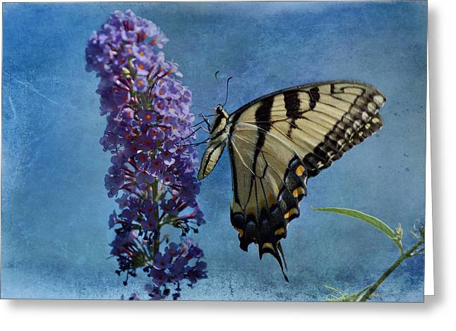 Indiana Art Greeting Cards - Eastern Tiger Swallowtail Butterfly 2 Greeting Card by Sandy Keeton
