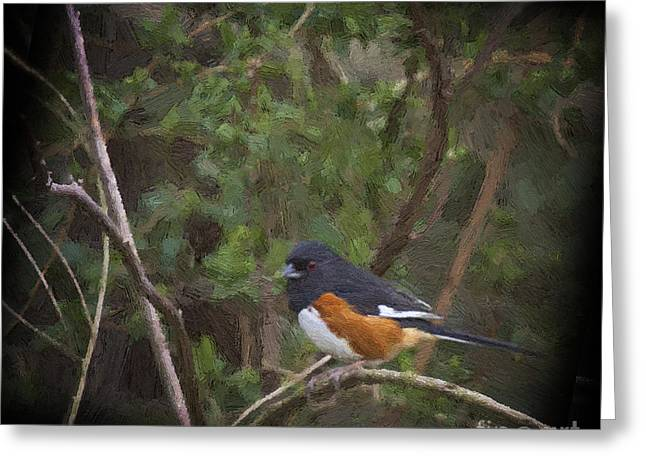 Eastern Towhee In Oil Greeting Card by Cris Hayes
