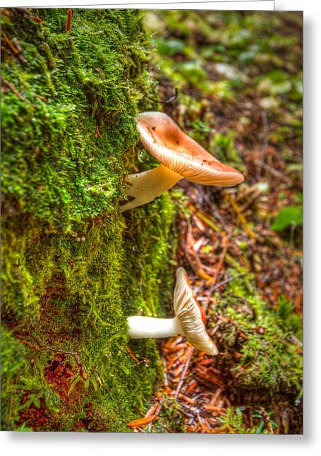 Toadstools Greeting Cards - Eat Me Greeting Card by Jean Noren
