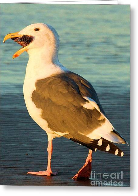 Seagull On Beach Greeting Cards - Eating Stars Greeting Card by Adam Jewell