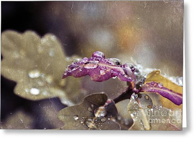 Aimelle Photographs Greeting Cards - Eau de Vie - s03t03b Greeting Card by Variance Collections