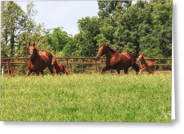Boone County Greeting Cards - Ebd-15 Greeting Card by Bob King