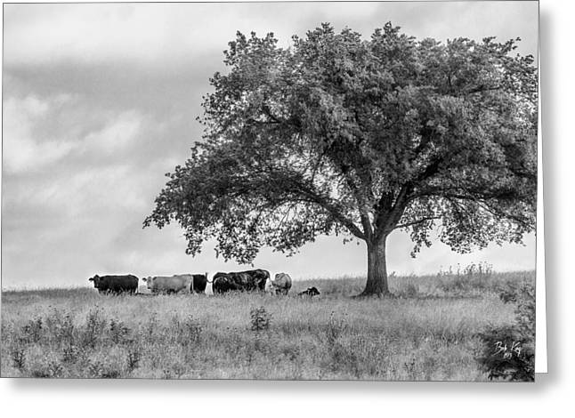 Boone County Greeting Cards - EBD-9bw Greeting Card by Bob King