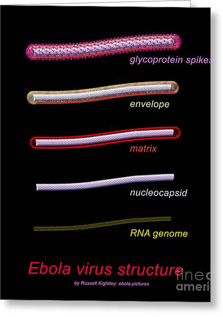 Ebola Virus Structure #1 Annotated Greeting Card by Russell Kightley