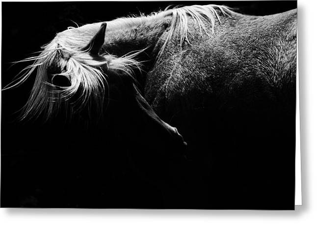 Quarter Horse Greeting Cards - Ebony Greeting Card by Julie Refer