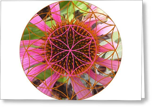 Sacred Geometry Greeting Cards - Echanacea Greeting Card by Sacred Geometry