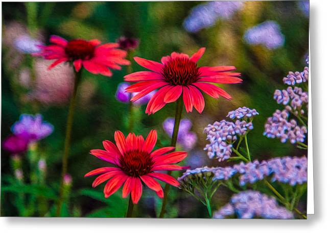Wolf Creek Greeting Cards - Echinacea and Yarrow Greeting Card by Omaste Witkowski