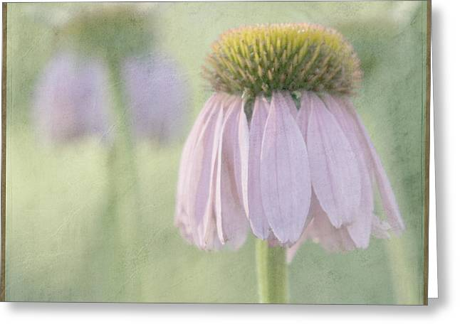 Cone Flowers Greeting Cards - Echinacea Coneflower Greeting Card by Juli Scalzi