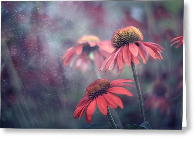 Echinacea Greeting Cards - Echinacea Dream Greeting Card by Magda  Bognar