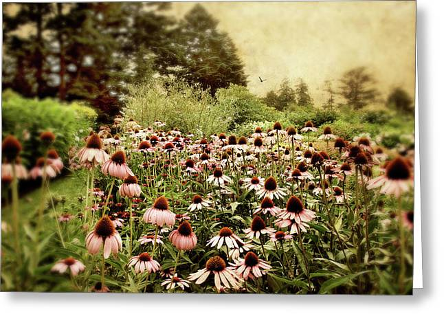 Cone Flowers Greeting Cards - Echinacea Garden Greeting Card by Jessica Jenney