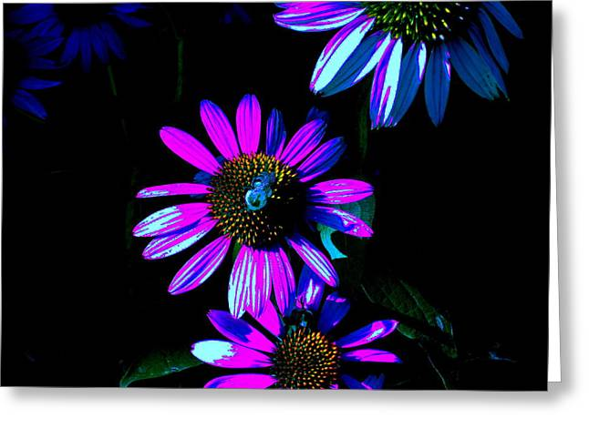 Echinacea Hot Blue Greeting Card by Karla Ricker