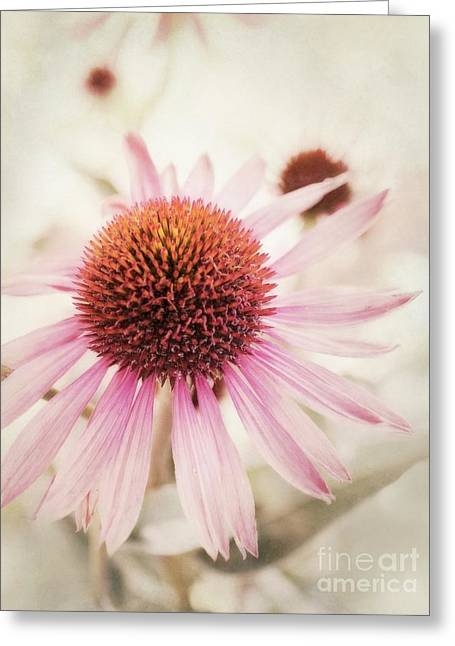 Aperture Greeting Cards - Echinacea Greeting Card by Priska Wettstein