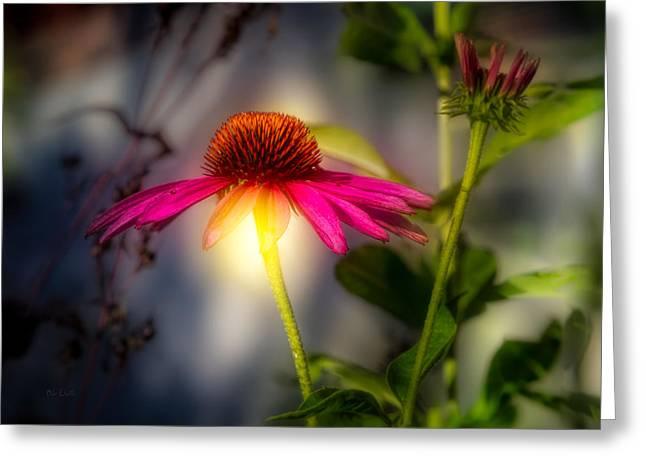 Impression Greeting Cards - Echinacea Sunrise Greeting Card by Bob Orsillo