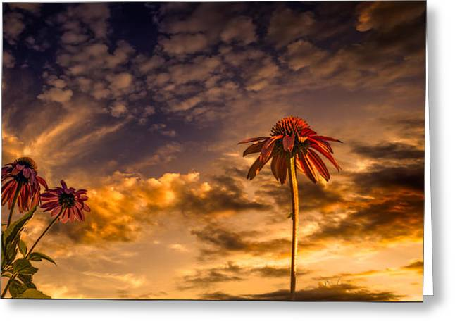 Canon 6d Greeting Cards - Echinacea Sunset Greeting Card by Bob Orsillo