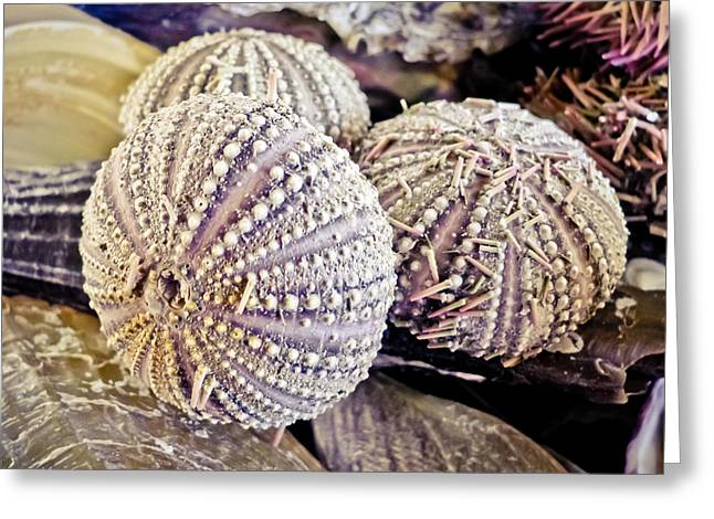 Shell Texture Greeting Cards - Echinoderm  Greeting Card by Colleen Kammerer