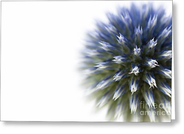 Purple Abstract Greeting Cards - Echinops  Greeting Card by Anne Gilbert