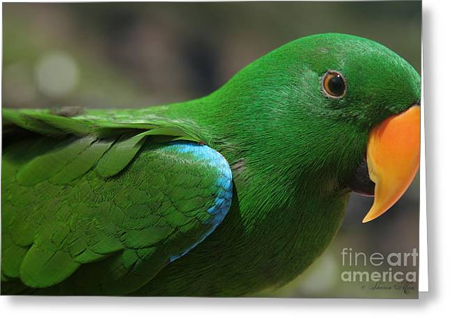 Parrot Art Print Greeting Cards - Eclectus roratus Greeting Card by Sharon Mau
